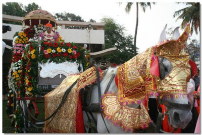 Acharya Swamishree gives darshan seated on the magnificent horse-drawn chariot during the swagat procession