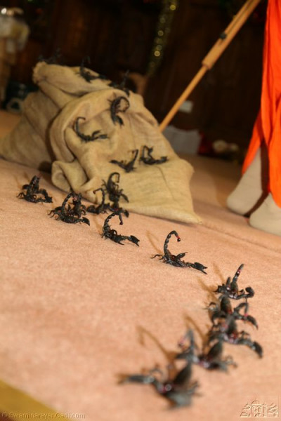 A line of scorpions appear as they did during the event 70 years ago