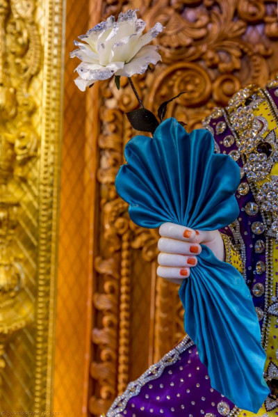 Divine darshan of Lord Shree Swaminarayan right hand holding a majestic blue handkerchief and a large white rose