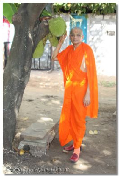 Jackfruit tree blessed by Acharya Swamishree