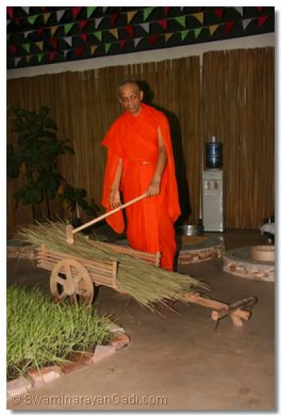 Acharya Swamishree piles a heap of grass on a model cart