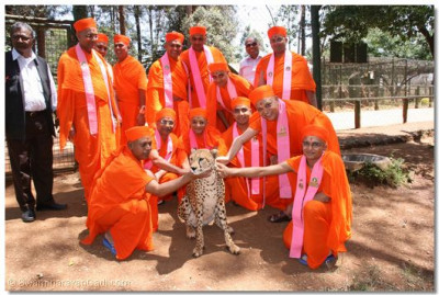Acharya Swamishree and Sant Mandal pose for a group photo with a cheetah