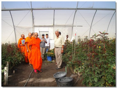 HDH Acharya Swamishree at the flower farm