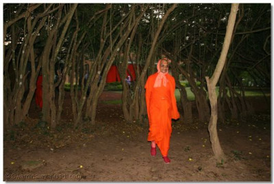 The natural beauty surrounding Acharya Swamishree as He takes the morning walk