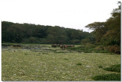 The herd of elephants that came for HDH Acharya Swamishree's blessing