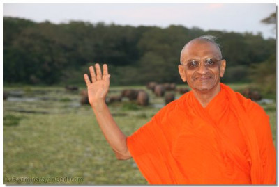 Acharya Swamishree with the herd of elephants on the banks of River Nile