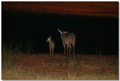 The deer with its young one