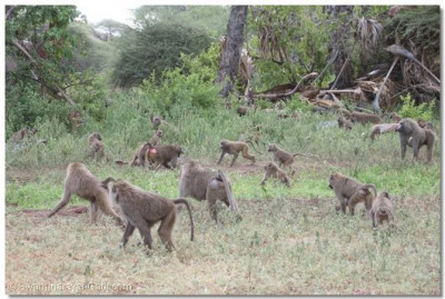 The wildlife in Lake manyara National Park