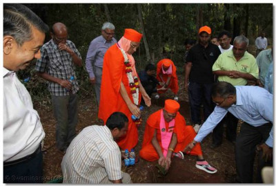 A tree planted by a sant whilst Acharya Swamishree waters it