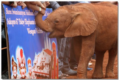 Adoption of the 67 elephants.