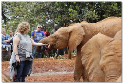 Lina Sideras, pampers one of the elephants.