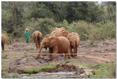 Elephants showcasing their playfullness