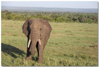 An elephant at the game reserve