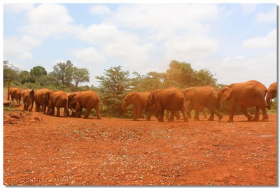 Elephants heading back to the wilderness.