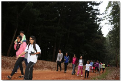 Karura forest peace walk.