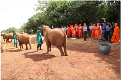 The elephants pose in front of Acharya Swamishree