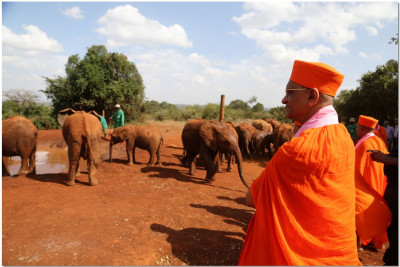 Acharya Swamishree watches the elephants drink water