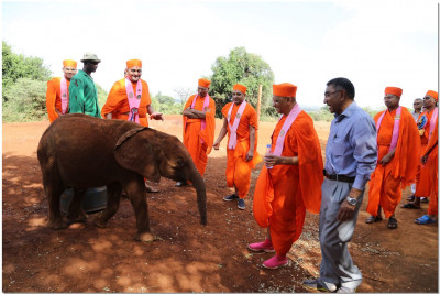 Acharya Swamishree blesses the elephant with water