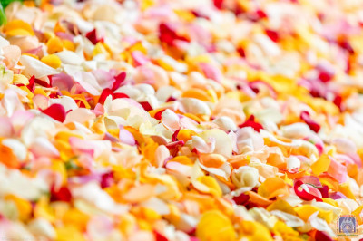Beautiful rose petals on the walkway to welcome His Divine Holiness  Acharya Swamishree