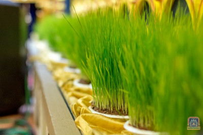 Display of wheat grass