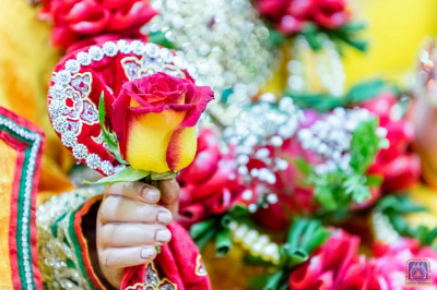 Shree Ghanshyam Maharaj adorns a beautiful rose