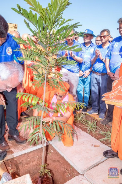Tree planting done by H.D.H Acharya Swamishree