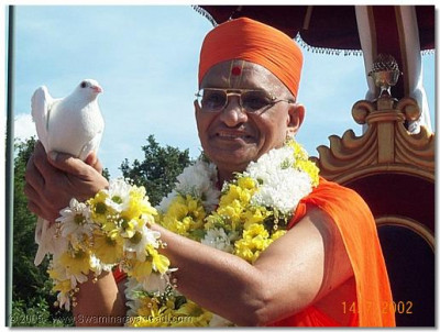 This lucky dove is blessed by HDH Acharya Swamishree