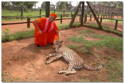 HDH Acharya Swamishree blessing the cheetah
