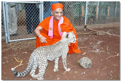 A young cub is also lucky to be blessed by HDH Acharya Swamishree