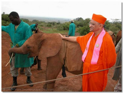 Other animals did not miss out on Acharya Swamishree's divine darshan