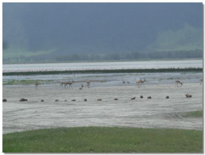 Flamingoes and hartebeests near the lake on the crater floor