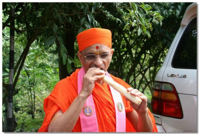 Acharya Swamishree gives darshan eating sugar cane