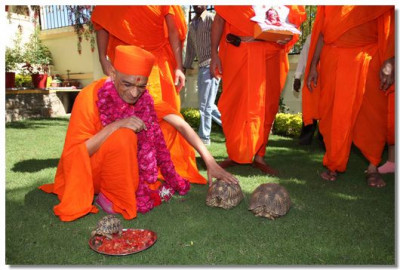 Acharya Swamishree blesses a tortoise in the grounds of a local official's home