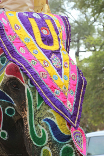 A close up one of the four elephants that takes part in the grand street procession