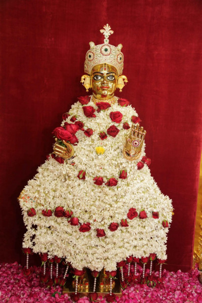 Divine darshan of Shree Harikrishna Maharaj adorned in garments made entirely of bright white flowers trimmed with large deep red roses