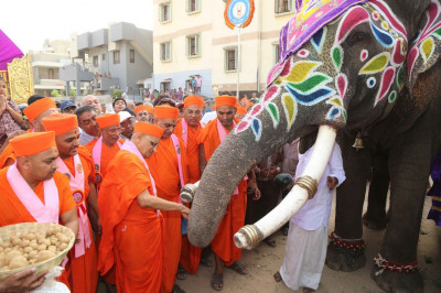 Acharya Swamishree feeds the elephant some prasad before the start of the procesison