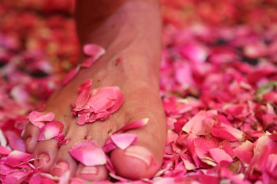 The divine right lotus foot of Acharya Swamishree graces the fresh fragrant flower petals