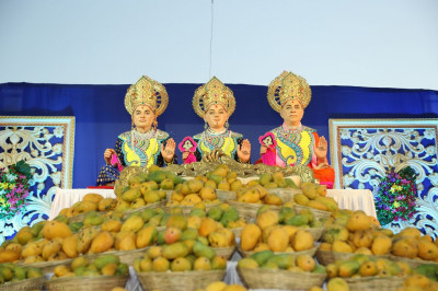 Over 2000 kg of Kesar mangoes are offered to the Lord