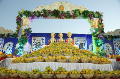 Over 2000 kg of Kesar mangoes are offered to the Lord on the grand stage