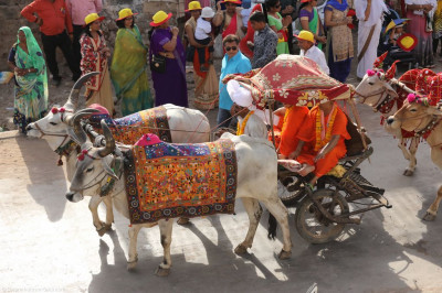 Sants ride on a traditional cattle cart