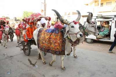 Sants ride on the traditional cattle cart