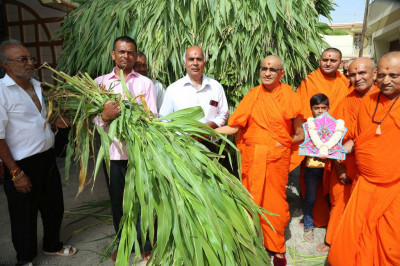 His Divine Holiness Acharya Swamishree blesses disciples who have sponsored the fresh shoots for feeding cattle