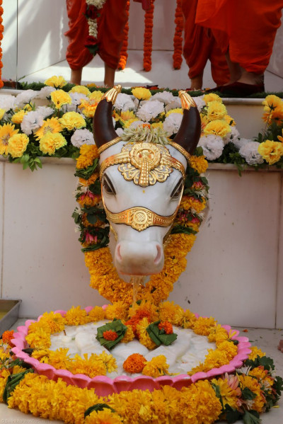 Divine darshan of the sacred cow from whose mouth emerges a stream of water that constantly bathes the divine footprints of Lord Shree Swaminarayan