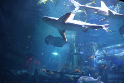 A huge variety of sea life inhabit the large aquatic centre