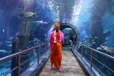 Divine darshan of His Divine Holiness Acharya Swamishree inside the tunnel surrounded by aquatic life in the large tank