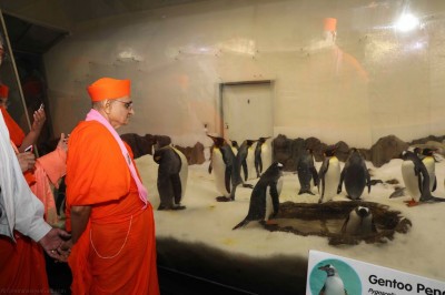Divine darshan of His Divine Holiness Acharya Swamishree with the penguins
