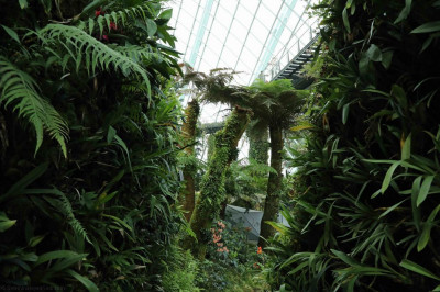 A huge variety of plants, trees and shrubs cultivated inside the complex