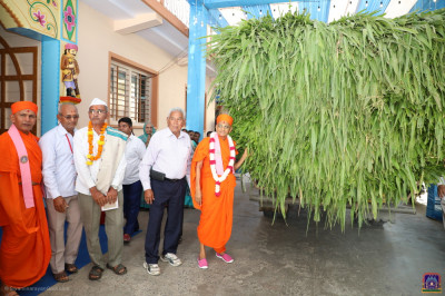 Divine darshan of Acharya Swamishree Maharaj with a large bundle of green feed to be donated to the cattle