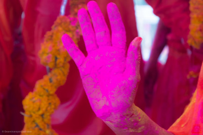 The divine lotus right hand of Acharya Swamishree Maharaj covered in pink