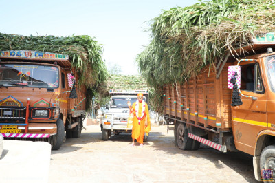 Divine darshan of His Divine Holiness Acharya Swamishree Maharaj with the truckload of fodder
